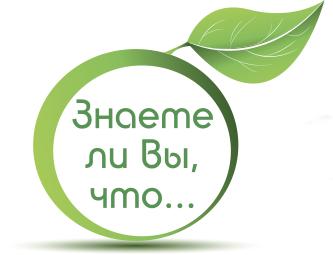 Листья стевии лечебные свойства и противопоказания